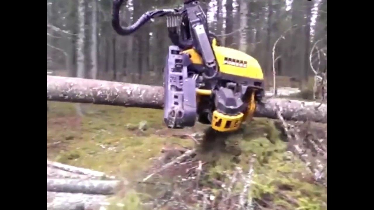 Tree Cutter Tree Cutter And Stripper