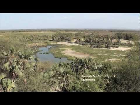 Awash National Park, Ethiopia