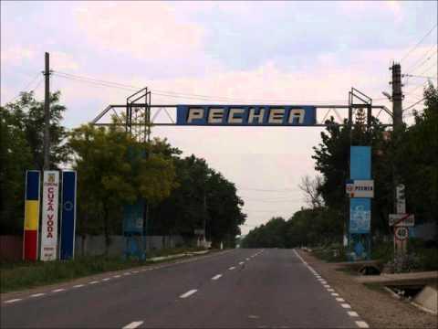Pechea - Politon manea