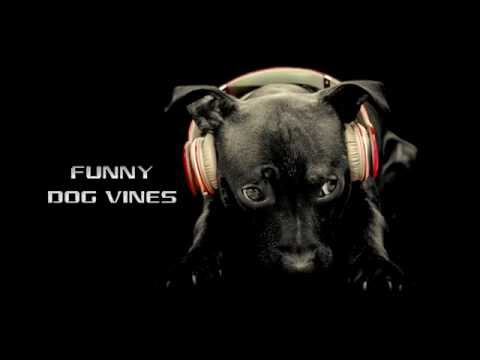FUNNY DOG VINES & FAILS