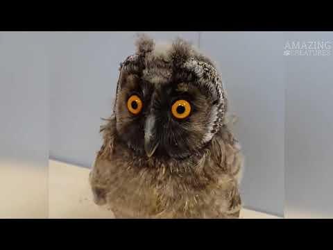 Сова - Смешные Совы/Приколы с Птицами - Funny Owls