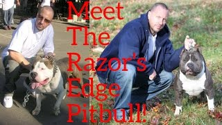 What Is A Razor's Edge Pitbull?