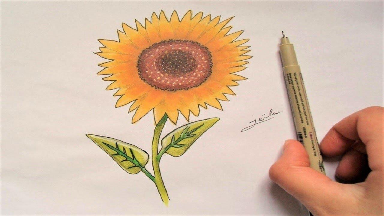 Dessin de fleur tournesol speed drawing youtube - Dessin de tournesol ...