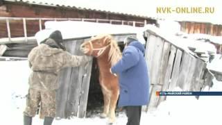 В Усть-Майском улусе проходит вакцинация животных против сибирской язвы