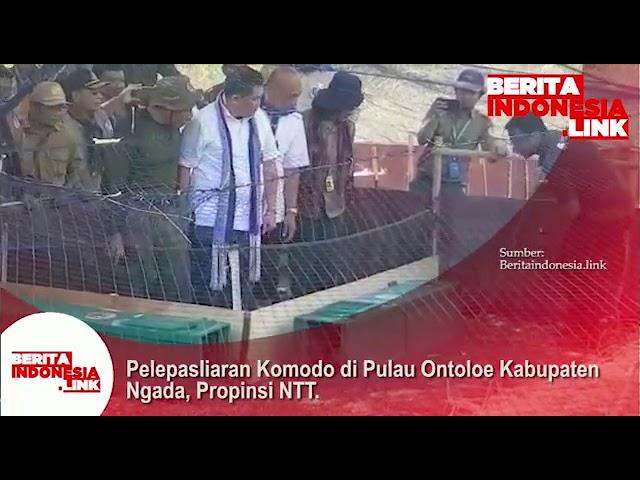 Pelepasliaran Komodo di Pulau Ontoloe Kabupaten Ngada, Provinsi NTT