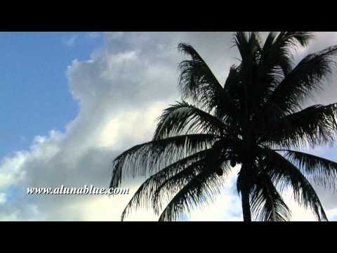 Stock Footage - Stock Video - Video Backgrounds - Tropical 0104