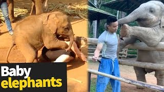 The Ultimate Baby Elephant Compilation