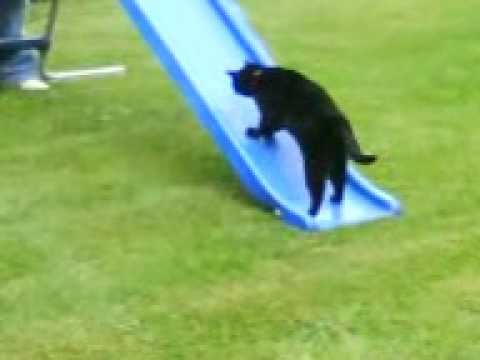 STUPID CAT ON SLIDE