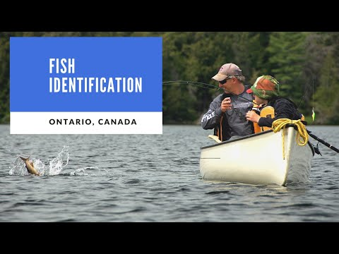 Fish Identification For Ontario, Canada