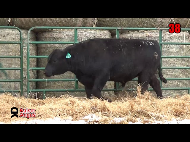 Kaiser Angus Ranch Lot 38