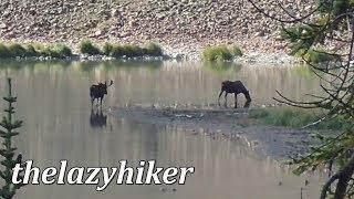 Trap Park Hike - Long Draw Road - Colorado - Moose galore!