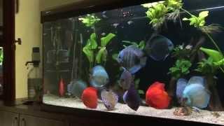 Discus aquarium 620 l