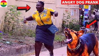 WHAT A SCATTER! Fake Angry Dog Prank!