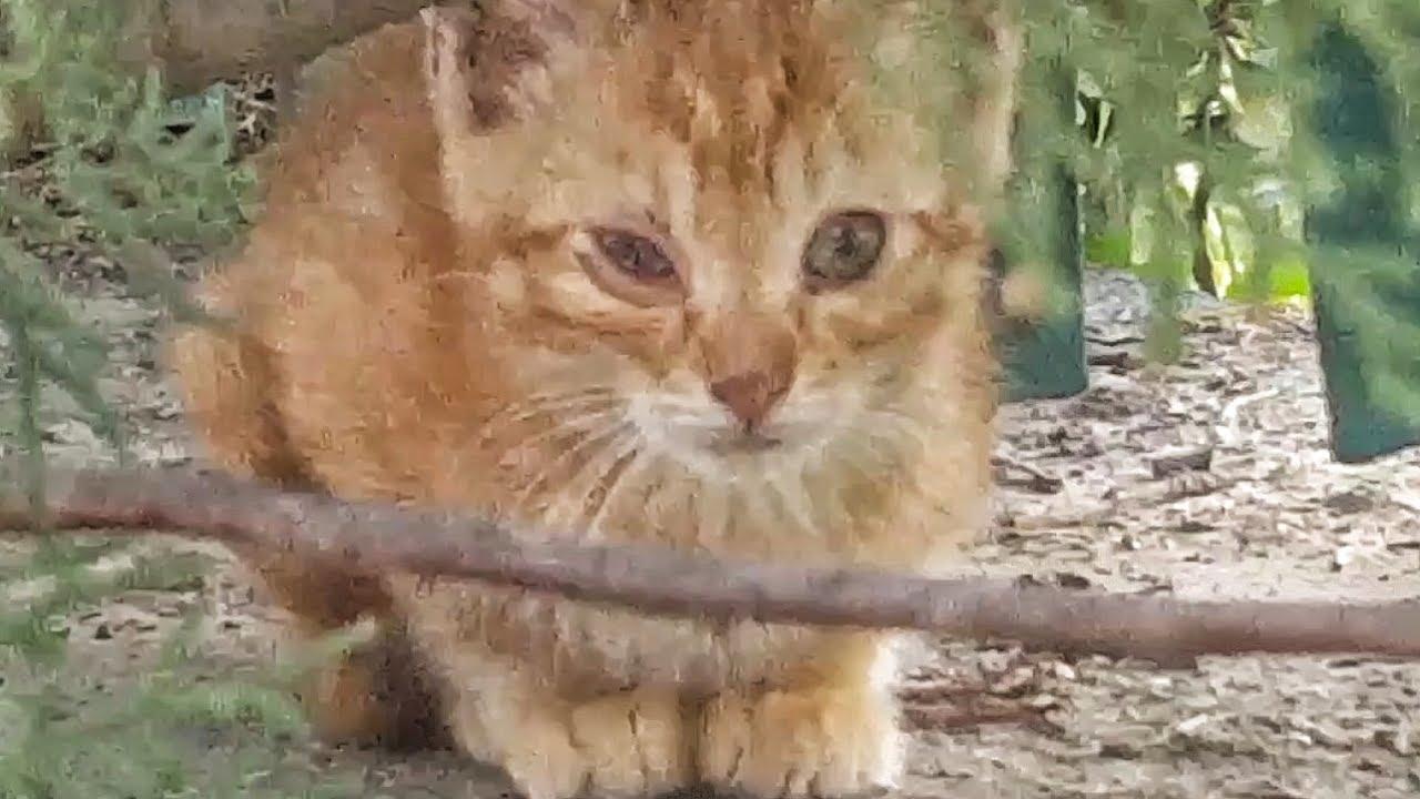 Questo Gattino Cucciolo Ha Locchio Malato Rimedi Youtube