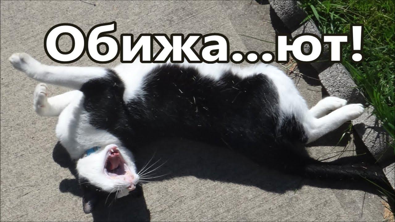 Кошки  видео