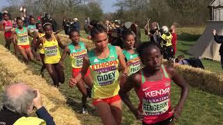 2019 World Cross Country Championships