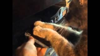 cat hates total recall