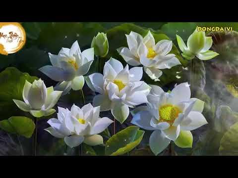 Nhạc Thiền Tịnh Tâm - Có Lời