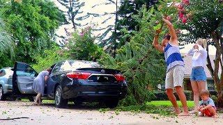 GIGANTIC TREE FELL ON HER CAR!