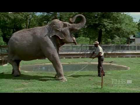 Nature (PBS) - Shirley the Elephant (Part 1)