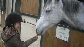 Lara and horses 1