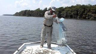 Shrimping On The St. Johns River Florida