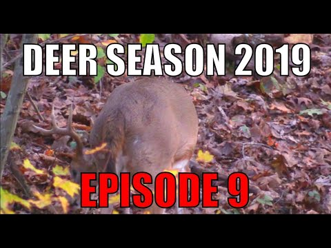 PUBLIC LAND HOTSPOT! 2019 Deer Season- Episode 9. Self Filmed Bowhunting The Ohio Rut