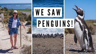 PATAGONIA WILDLIFE - Spotting Penguins and Sea Lions on Valdes Peninsula | Chubut, Argentina