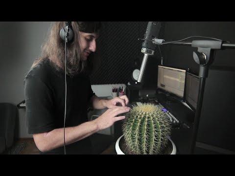 Cactus Beat