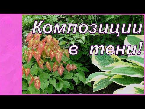 Клумба в тени - что посадить и как? Цветы и декоративные растения, которые растут почти без ухода.