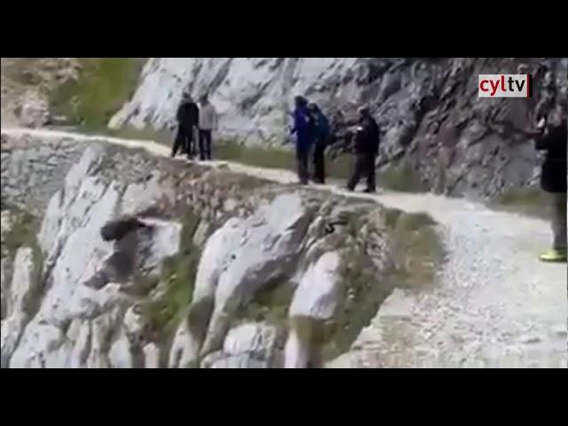 Unos senderistas matan a un jabalí en el Cares