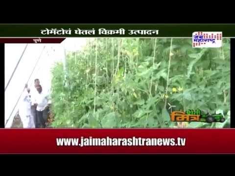 Sheti Mitra, Pune shade net tomato farming - seg 2
