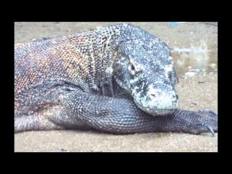 Fauna of Indonesia