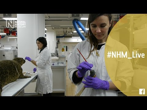 Cotton buds and plumber's tape with Arianna Bernucci and Cheryl Lynn |#NHM_Live
