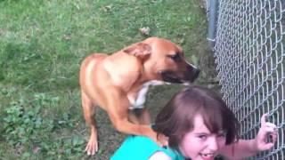 Un chien accueille une fillette à son retour de l