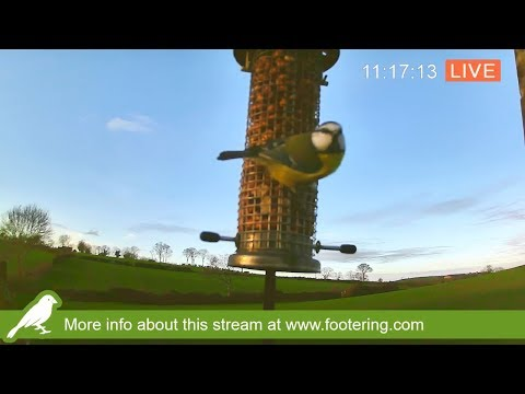 Nest Box Stream