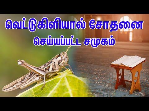 வெட்டுகிளியால் சோதனை செய்யப்பட்ட சமுகம் | Tamil Muslim Tv | Tamil Bayan | Islamic Tamil Bayan