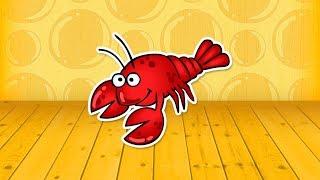 Odgłosy i wygląd zwierząt, morskich stworzeń i owadów | Pandusiowo