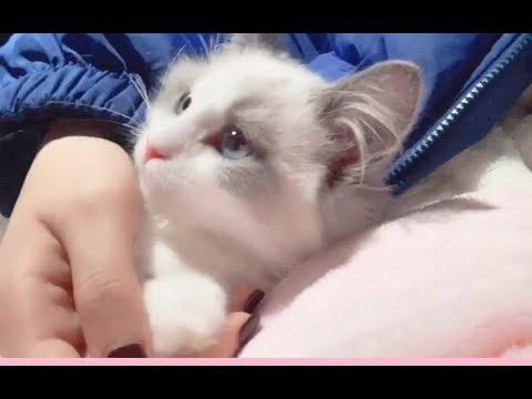 【Ragdoll】SNH48 戴萌 Anna's Growth Diary Ep1 - Dai Meng