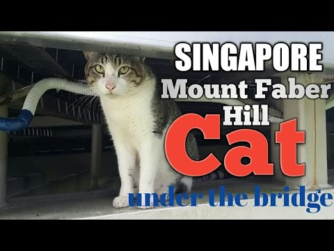 Singapore Mount Faber Hill Cat under the bridge