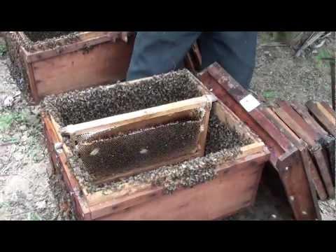Mật ong - Mật ong rừng, mật ong hoa bốn mùa
