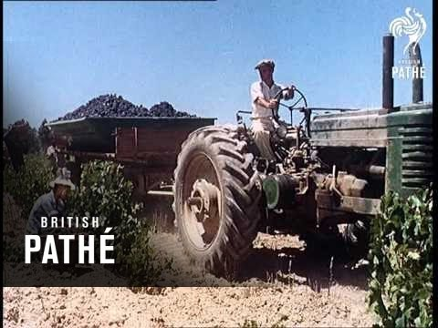 Grape Harvest Aka South African Grape Harvest (1962)