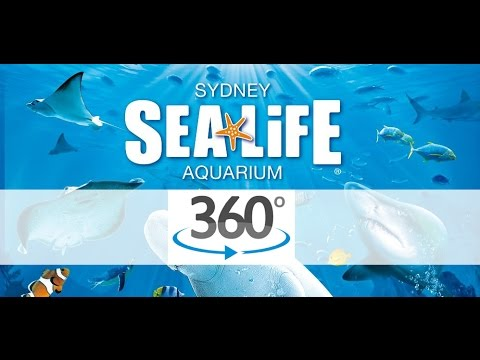 SEA LIFE Sydney 360° Underwater Video - Sharks Experience!