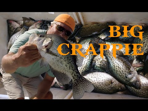 Crappie Secrets What Your Friend Is Not Telling YOU