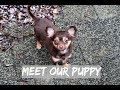 PUPPYS FIRST DAY HOME | Long Haired Chihuahua - New Family Dog