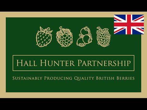 Working at Hall Hunter Partnership - British