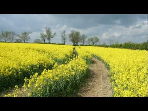 Песня Fields of Gold Sting - Kevin Kern скачать mp3 и слушать онлайн