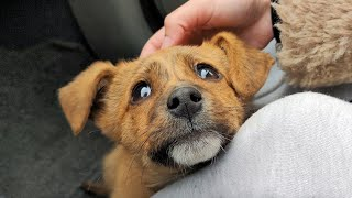 Abandoned Puppy Followed Us Home | Whole Story