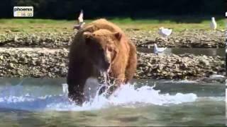 Im Visier der Grizzly - Giganten - Adventure X