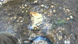 Gold Panning at Slatey Creek - Creswick Forest (Italian Commentary)
